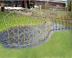 The Whale Den